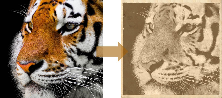 Anymaking Old Photo Effect for Animal Picture